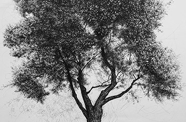 Tree No.3: Pen drawing by Singapore contemporary artist Liu Ling