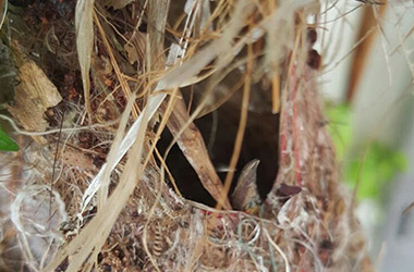 Bird's Nest, Hatchlings 1