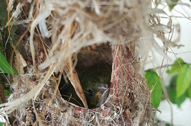 Bird's Nest, Hatchlings 2