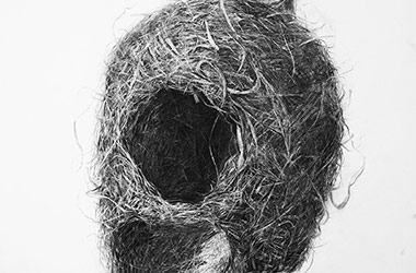 Bird Nest No.3 - Nature drawing, realism in charcoal, Singapore art class and art scene
