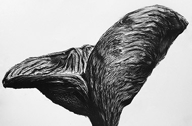 Organic Shape No.5 - Nature drawing, realism in charcoal, Singapore contemporary art scene and art class