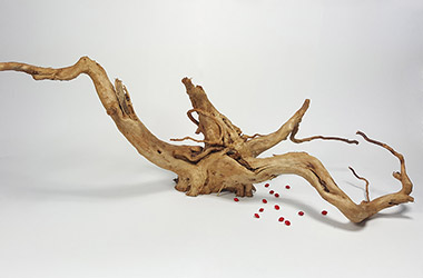 Driftwood No.2 by NAFA alumni artist. Art guide to fine art in Singapore contemporary photography art prints centred on experimental photography, urban art, installation art and fine art curriculum academic studio practice in Singapore contemporary arts scene, art space and art culture