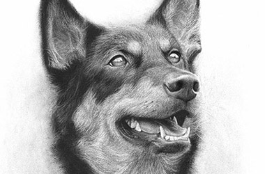 Ash - Realistic Animal Portrait Drawing, pet drawing, pet portrait, commissioned dog drawing