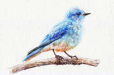 Bird  - Pen Drawing by Singapore contemporary artist Liu Ling
