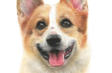 Bruno - Realistic Animal Portrait Drawing, pet drawing, pet portrait, commissioned dog drawing