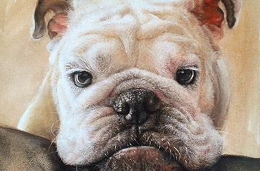 Bubu - Realistic Animal Portrait Drawing, pet drawing, pet portrait, commissioned dog drawing
