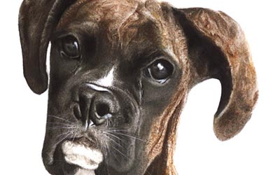 Moe - Realistic Animal Portrait Drawing, pet drawing, pet portrait, commissioned dog drawing