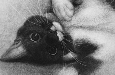 Momo - Realistic Animal Portrait Drawing, pet drawing, pet portrait, commissioned cat drawing