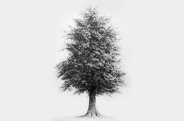 Tree No.2  - Pen Drawing by Singapore contemporary artist Liu Ling