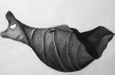 Leaf -  - Nature drawing, realism in charcoal, Singapore art class and arts scene. Beautiful artwork by Singapore contemporary artist