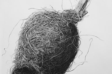 Bird Nest No.5 - Nature drawing, realism in charcoal, Singapore art class and art scene. Beautiful artwork by Singapore contemporary artist
