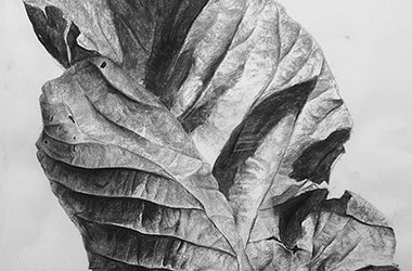 Leaf No.1 - Nature drawing, realism in charcoal, Singapore art class and art scene