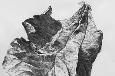 Leaf No.2 - Nature drawing, realism in charcoal, Singapore art class and arts scene. Beautiful artwork by Singapore contemporary artist