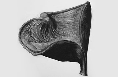 Organic Shape No.1 - Nature drawing, realism in charcoal, Singapore art class and arts scene. Beautiful artwork by Singapore contemporary artist