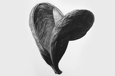 Organic Shape No.3 - Nature drawing, realism in charcoal, Singapore art class and art scene. Beautiful artwork by Singapore contemporary artist