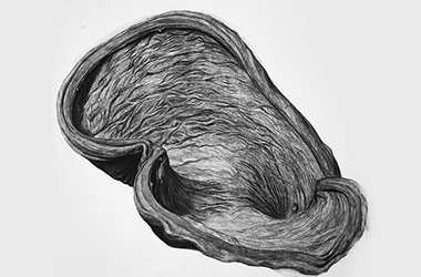 Organic Shape No.5 - Nature drawing, realism in charcoal, Singapore art class and arts scene. Beautiful artwork by Singapore contemporary artist