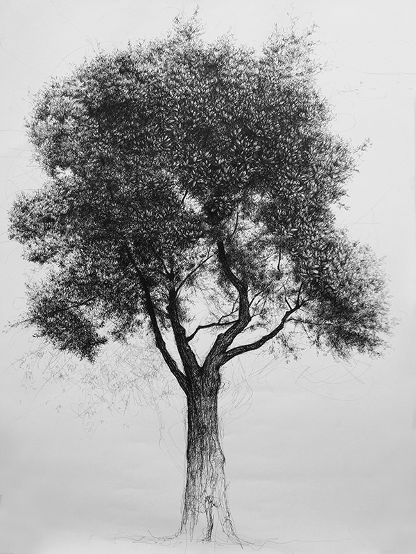 This is a graphic of Adorable Tree Pen Drawing