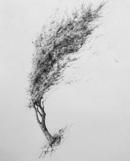 Pen on paper, 100 x 70 cm